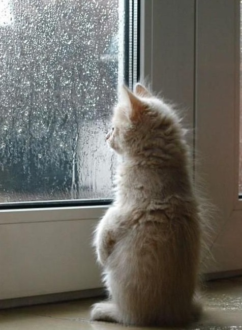 piove-di-nuovo-lautunno-e-qui.jpg