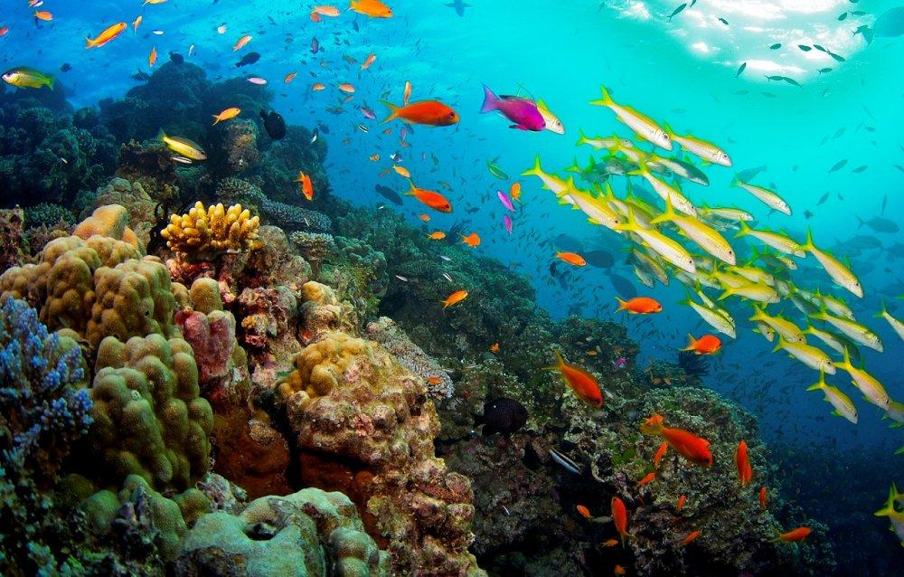 La-Grande-Barriera-Corallina.jpg