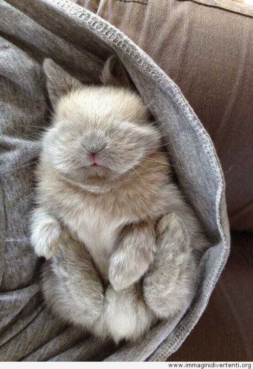 assonnato-coniglietto.jpg