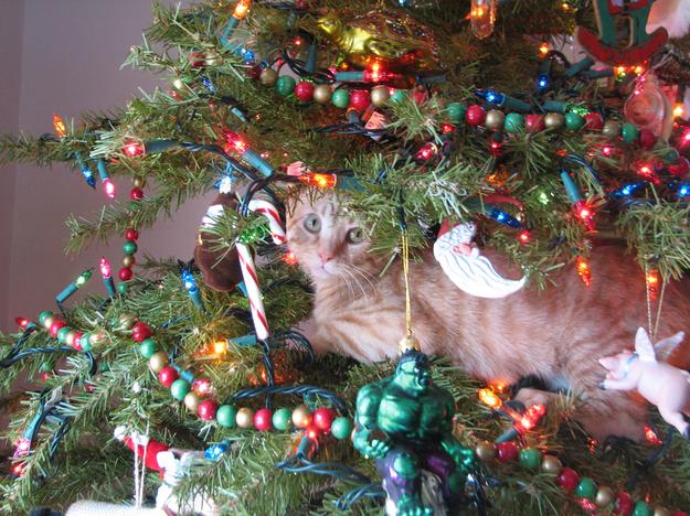 gatti-albero-di-natale-3.jpg