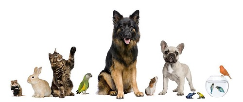 gli-animali-domestici-ci-migliorano-la-vita.jpeg
