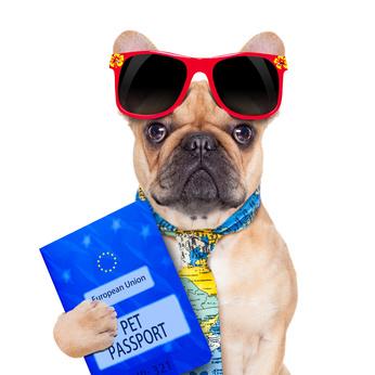 passaporto-cane.jpg
