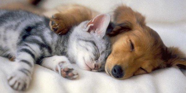 veterinario_gratis.jpg