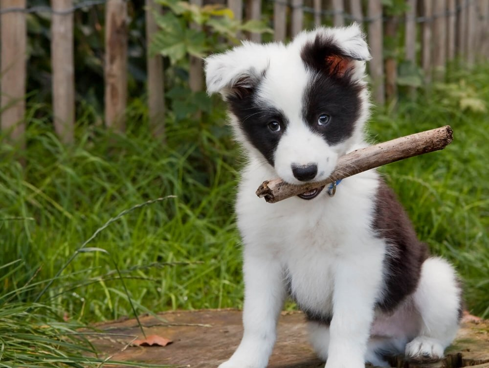 cuccioli-di-cane-arrivo-1500x1127.jpg