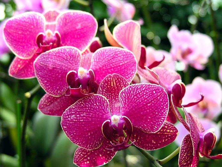 orchidee_NG1.jpg