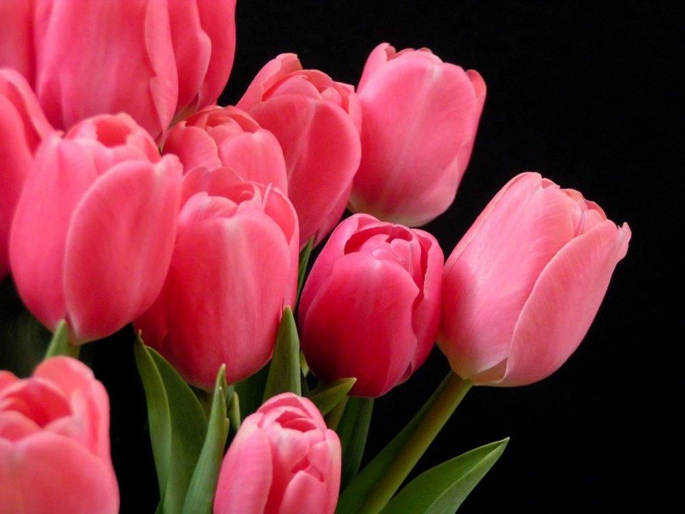 tulipani-home.jpg