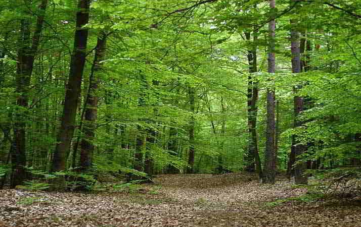 sognare la foresta.jpg