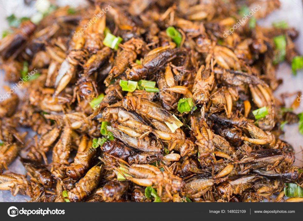 depositphotos_148022109-stock-photo-cricket-bug-fried-asian-insect.jpg