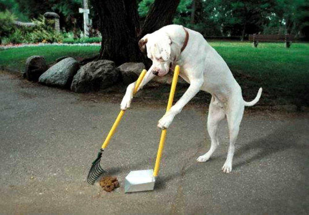 paletta-per-cani-4.jpg