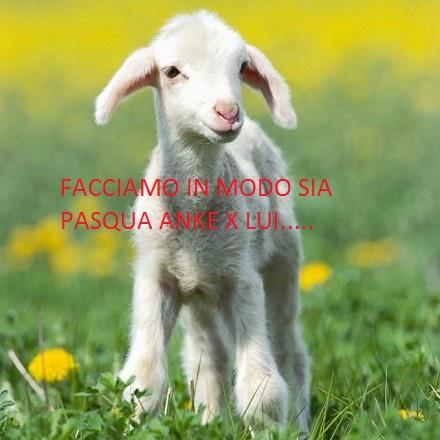 un agnellino.jpg